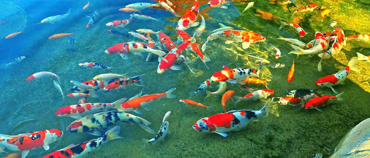 Koi Pond Filtration System Media